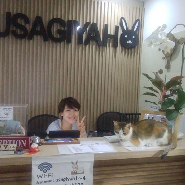 うさぎやスタッフのVanちゃんの愛猫Miaは時々うちの看板娘になります。たまーに遊びにきますが、とっても人見知りなだけなので、あなたのことが嫌いなわけではないですよ(笑).でも2回目はもう仲良しになれますよ~♪.ホーチミンの日本人ゲストハウス兎家(うさぎや)ゲストハウスusagiyah.com.#usagiyah #兎家 #兎家ゲストハウス #うさぎや #日本人宿 #ゲストハウス #ドミトリー #Guesthouse #ベトナム #Vietnam #ホーチミン #バックパッカー #バックパッカー女子 #一人旅 #海外旅行 #旅好きの人と繋がりたい #猫 #ネコ #猫飼いたい #愛猫 #看板娘 #人見知り